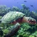 Husker Divers