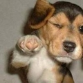 Doghouse Pet Health Centers