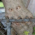 Arbormax Tree Service