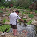 Chris' Water Gardens
