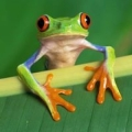 Big Frog Custom T Shirts and More
