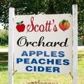 Scott's Orchard