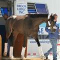 Brook Ledge Horse Transport